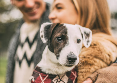 holding dog with sweater